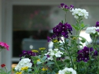 eroeffnung_fleur_10