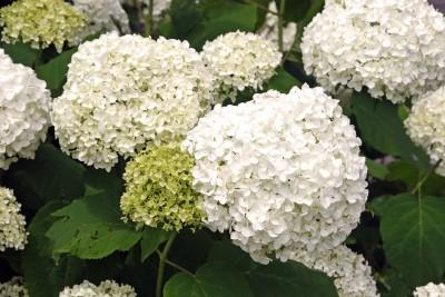 wir warten auf den sommer fleur florale werkstatt wuppertal schwelm. Black Bedroom Furniture Sets. Home Design Ideas
